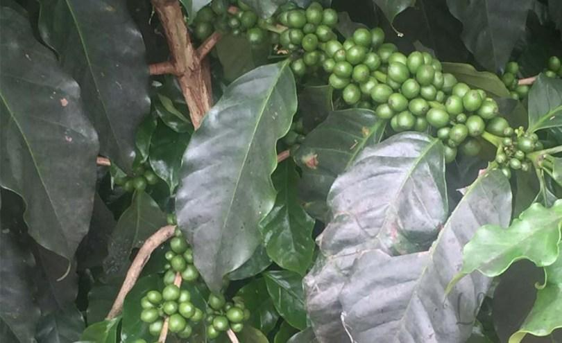 https://i0.wp.com/www.loftyspectrums.com/wp-content/uploads/2016/06/coffee-2.jpg?resize=810%2C495