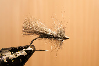 Grey Sedge