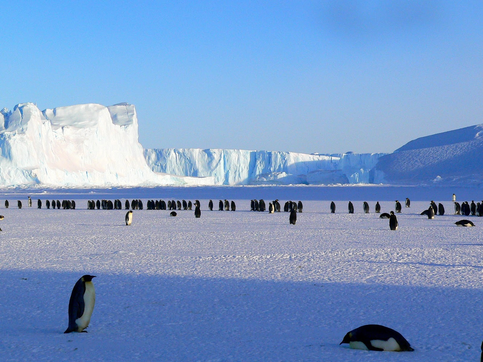 penguins-emperor-antarctic-life-48814.jpeg