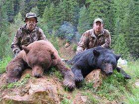 trophy bears