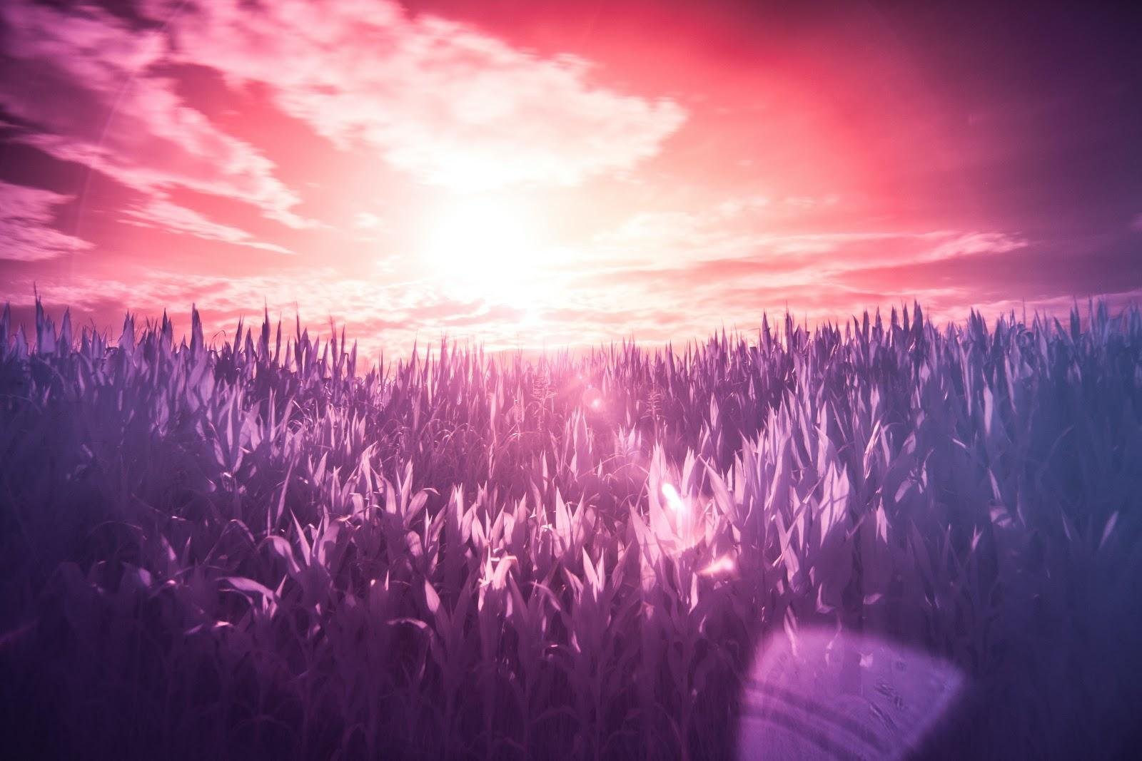 infrared photography of a farm