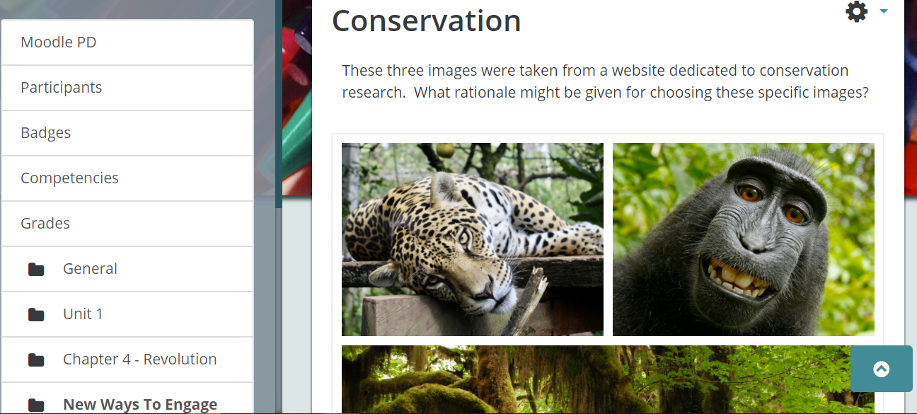 Screenshot showing a completed collage with images from the rain forest that represent the common theme of conservation.