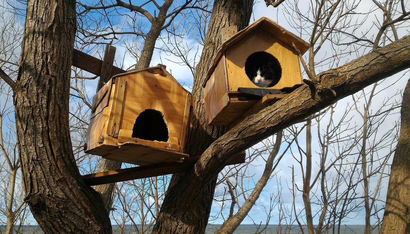 Домик для кошки на дереве