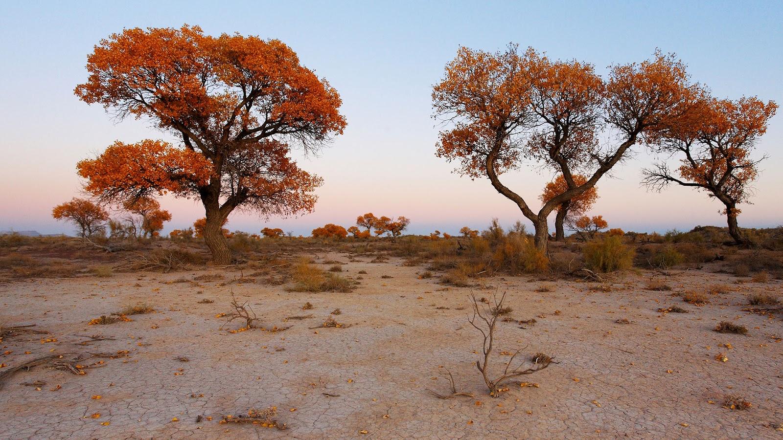 Туранговая роща Чарынского каньона