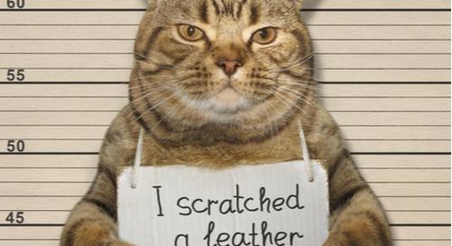 Polizeifoto einer Katze