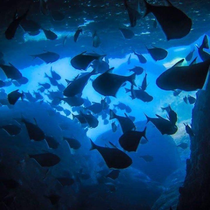 A school of fish in Mun Island