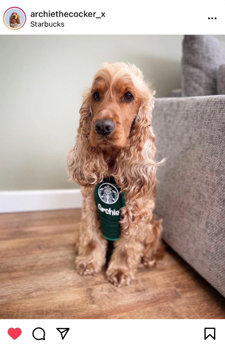 Starbucks Employee Halloween Costume Ideas For Dogs
