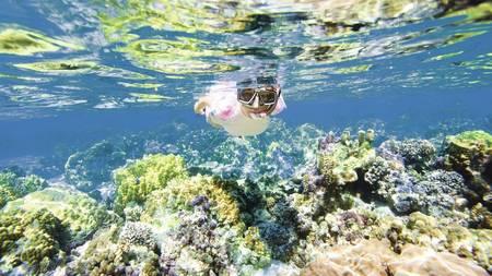 snorkelin bluebay.jpg
