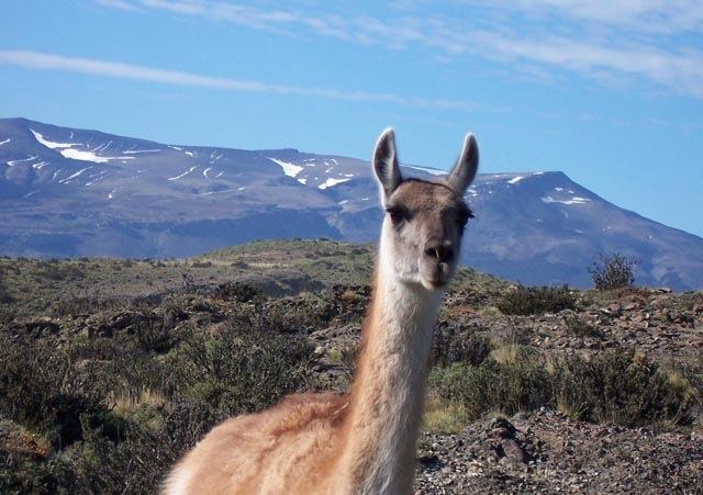 Fauna de Torres del Paine