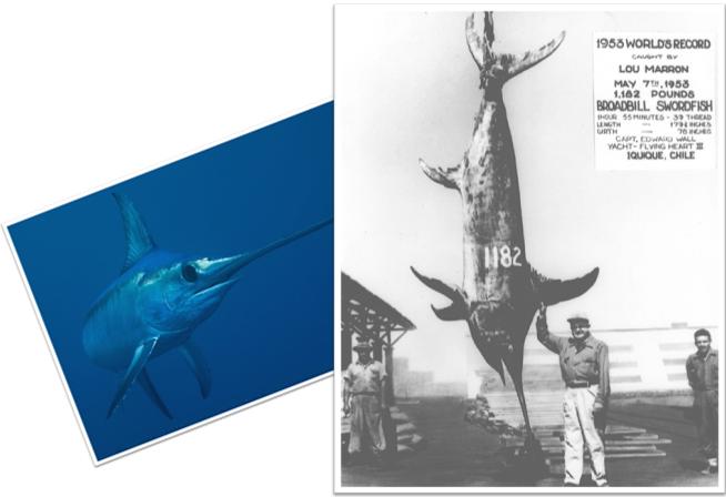 Dangerous swordfish