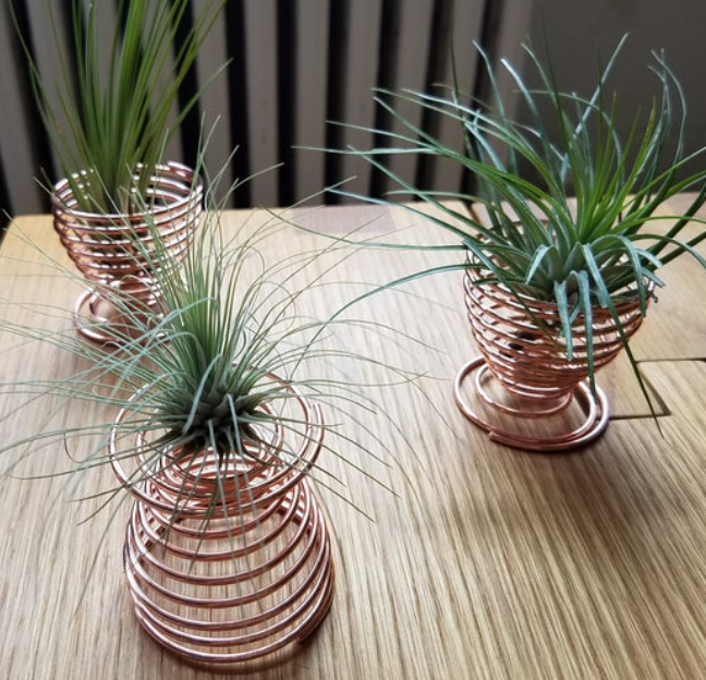 Three rose gold spiral air plant holders  on wood home office desktop