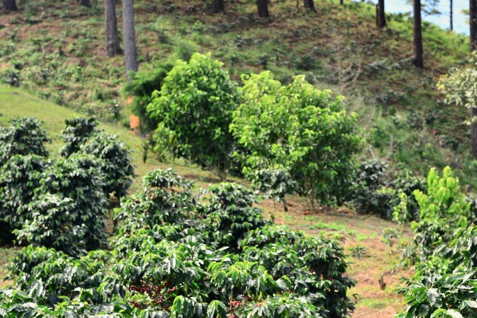Prática já é bastante difundida em outras culturas (Fonte: Unsplash)plantio de café