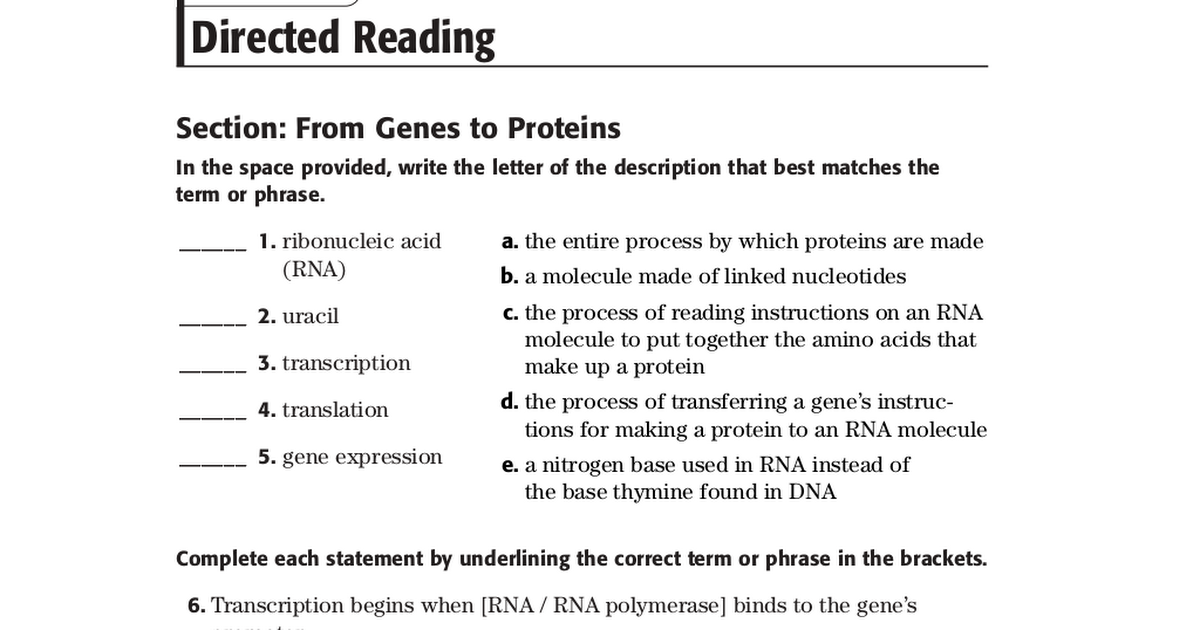Directed Reading 101pdf Google Drive – Gene Expression Worksheet