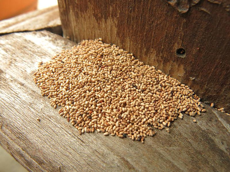 File:Termite Fecal Pellets.jpg
