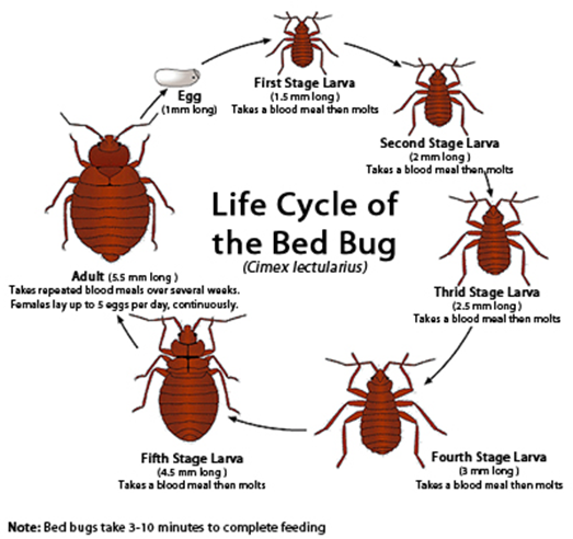 bed bug information and best practices mobius consortium linking