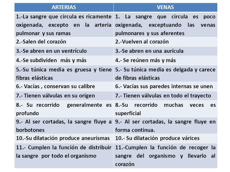 biologia y geologia: CUESTIONES DEL SISTEMA CIRCULATORIO