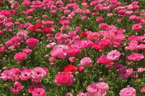 flower_fields_2.jpg