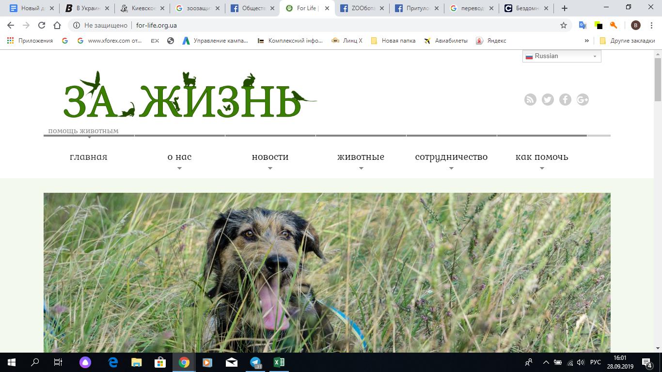 """Сайт организации """"За жизнь""""."""