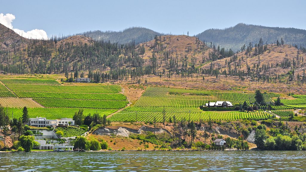 1024px-Kelowna_Vineyards_from_the_Okanagan_Lake.jpg