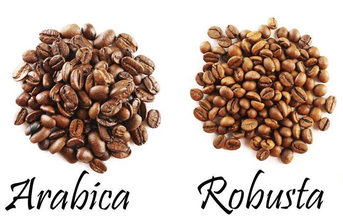 Giá 1kg cà phê rubosta và giá 1kg cà phê Arabica hiện nay như thế nào?
