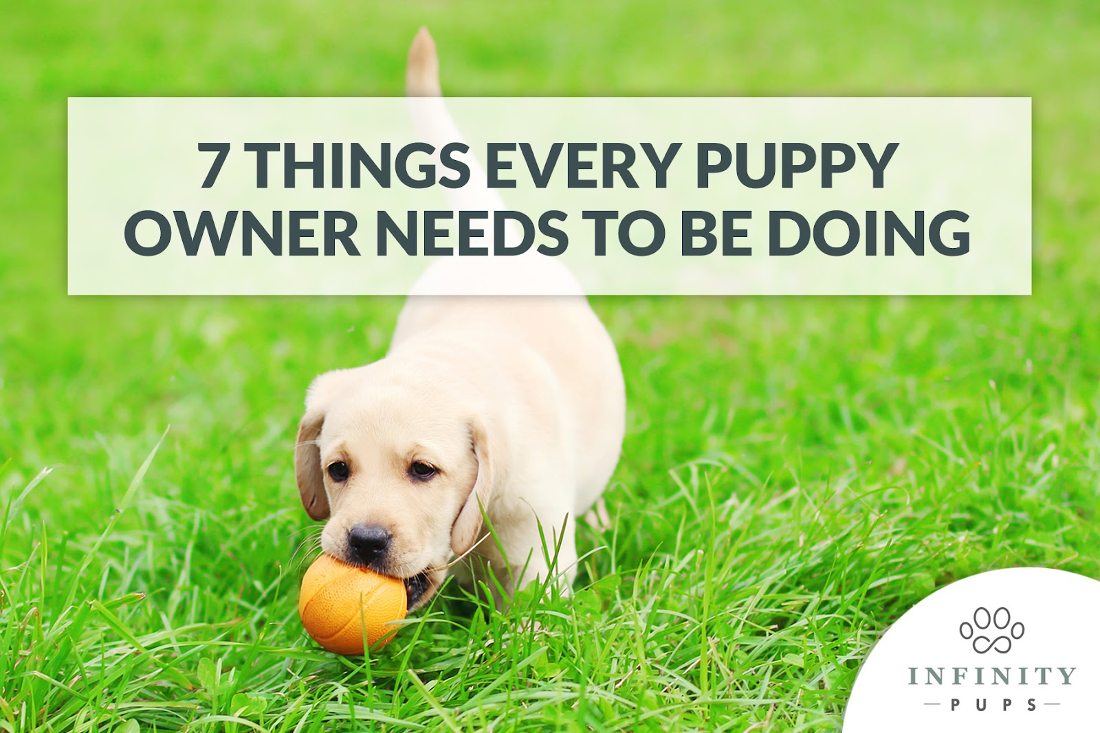 7 things every puppy owner needs to be doing