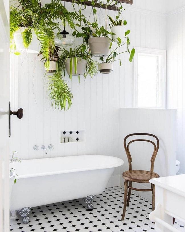Ivy e samambaias para o banheiro