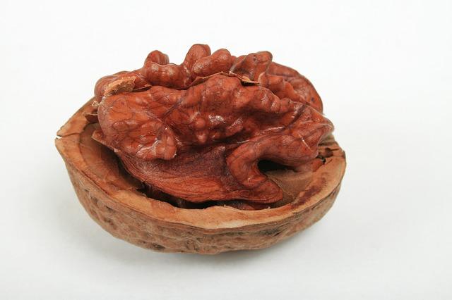 Walnut, Hazelnut, Nut Shell