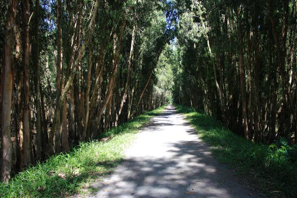 Khu rừng này mang nhiều vẻ đẹp của thiên nhiên ban tặng cho mảnh đất đồng bằng sông Cửu Long nói chung và An Giang nói riêng.