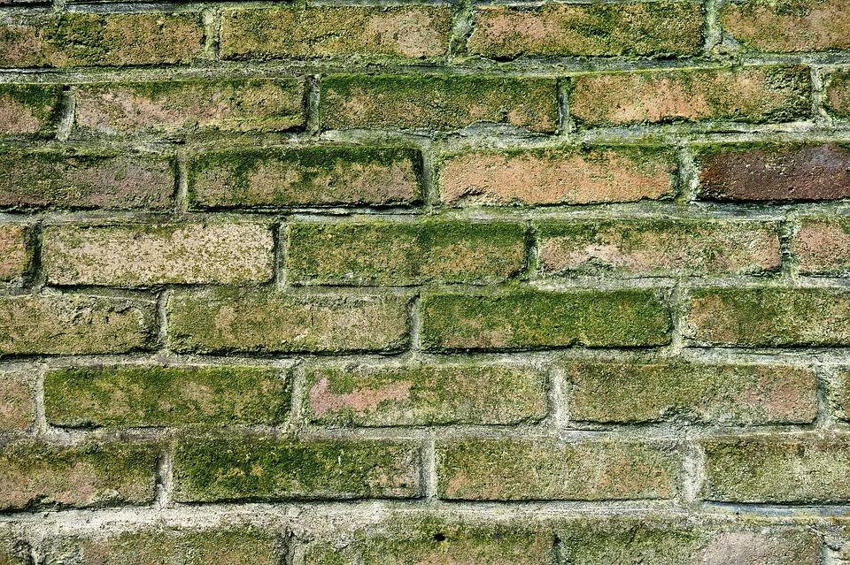 Wall, Brick Wall, Moldy Wall, Green Mold