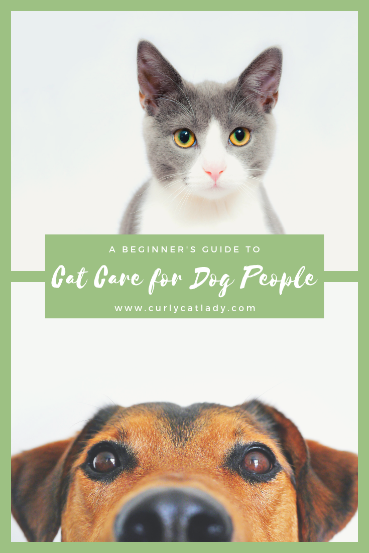 A Beginner's Guide to Cat Care for Dog People