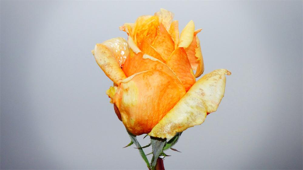 Orange Gold.jpg