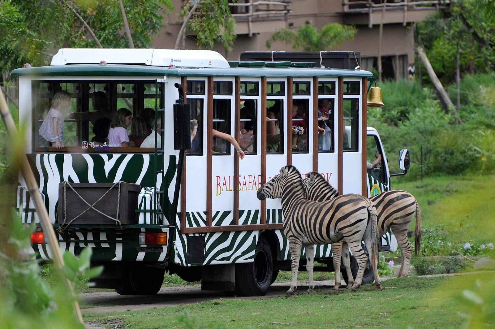 Safari bus on bali safari
