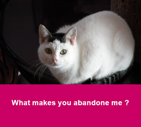 why abandon pet
