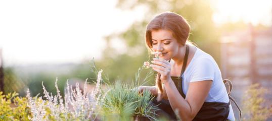 Online Garden Design & Maintenance Diploma Course by Cudoo