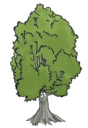 Image result for nz trees graphic