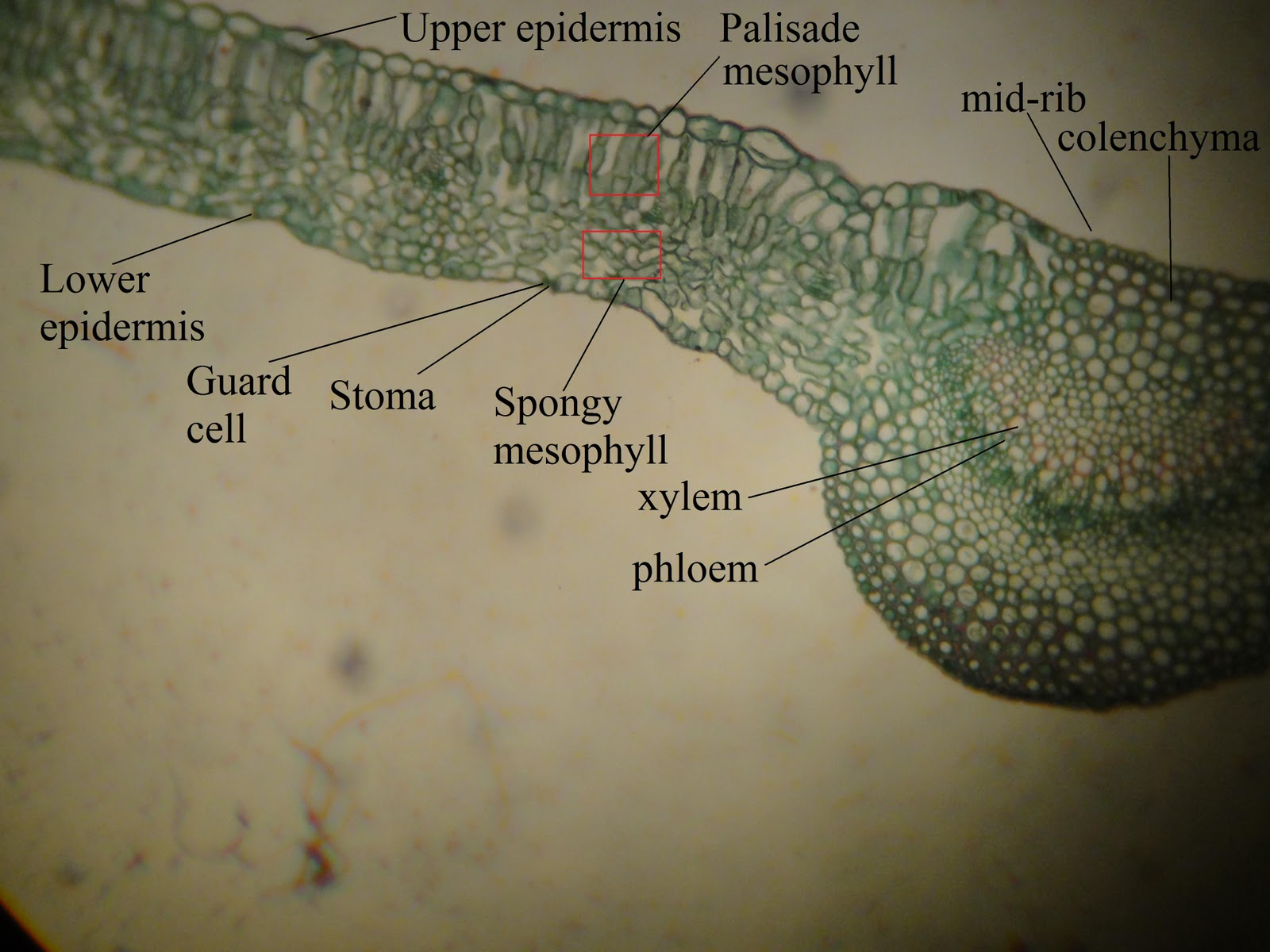 Amy B U0026 39 S Bio 20 Blog  Plantae