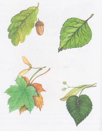 деревьев и листьев,...