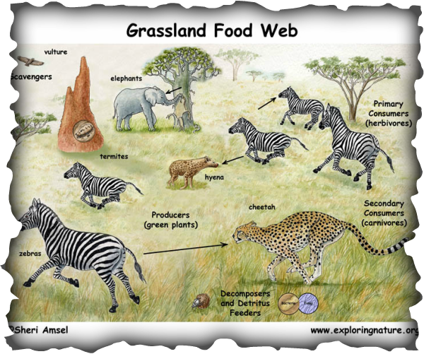 biotic factors - GRASSLANDS