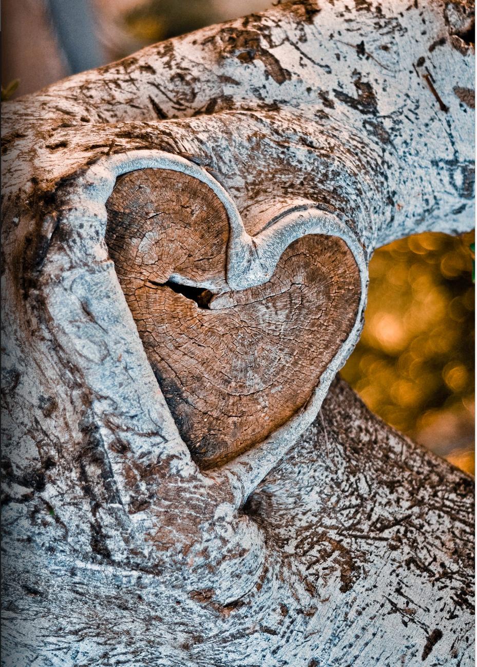 Heart Wood - Amit Zand.png