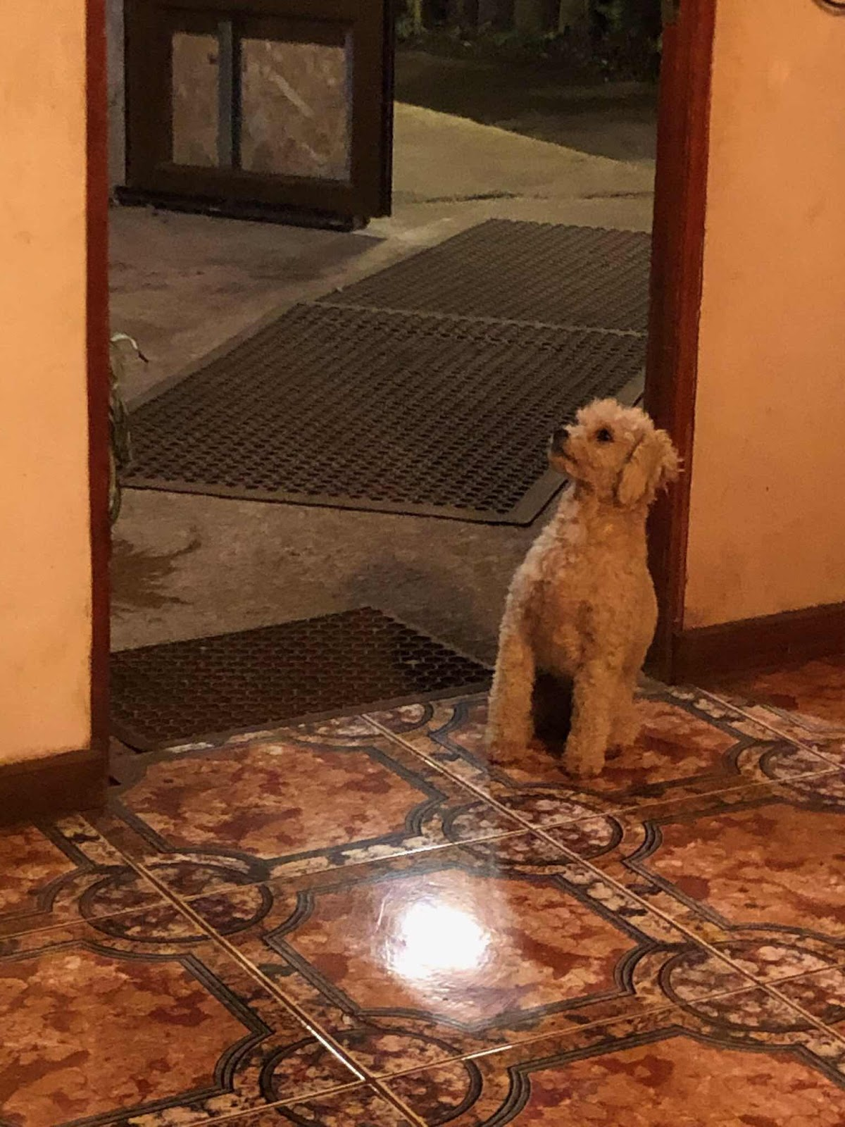 one of the wild dogs in Chile waiting at the restaurant door for treats