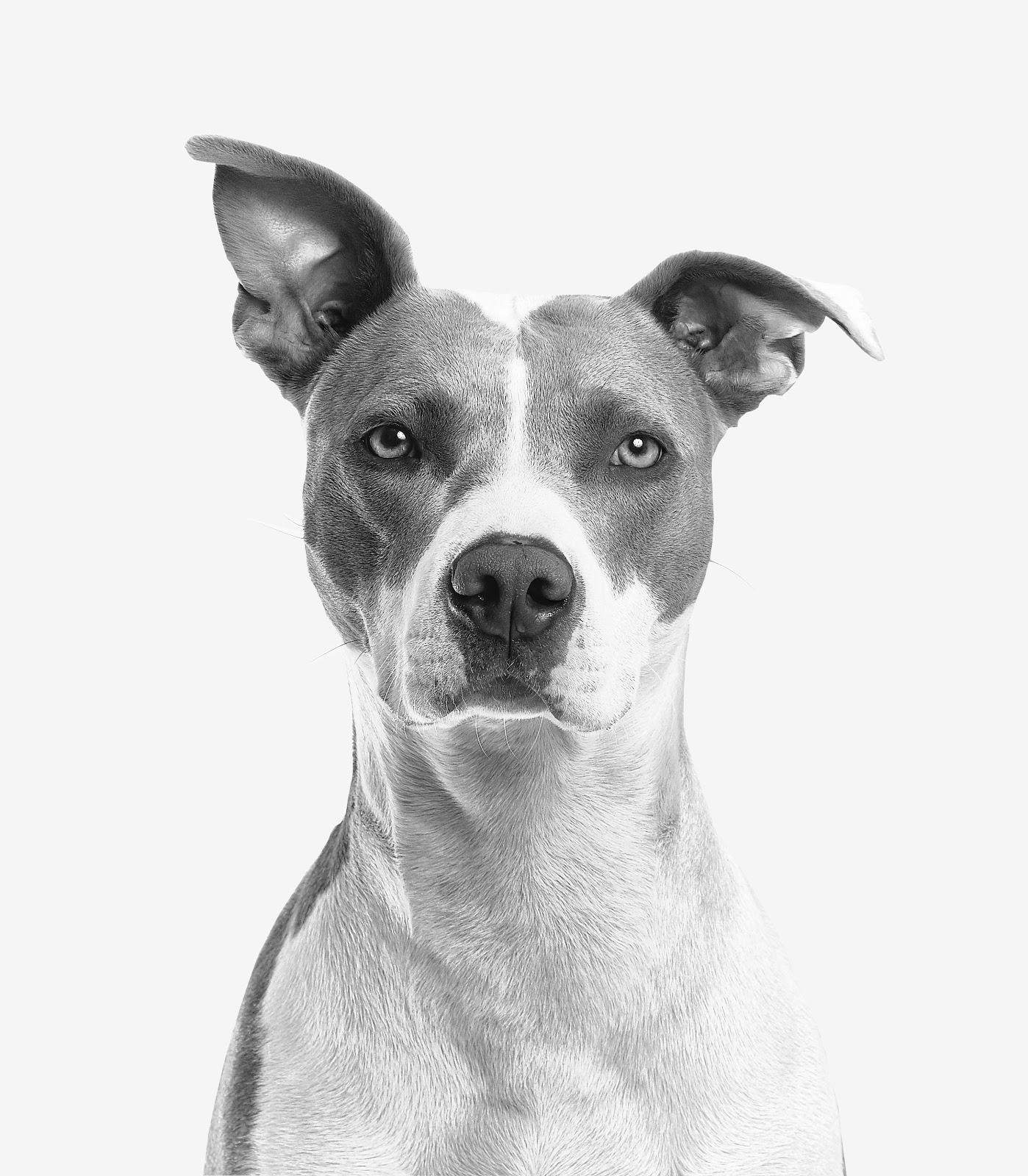 black and white photo of a dog