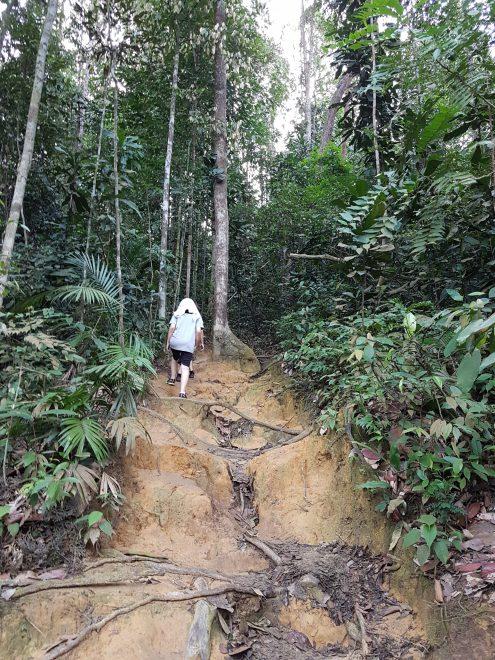 Hiking in KL, wawasan hill