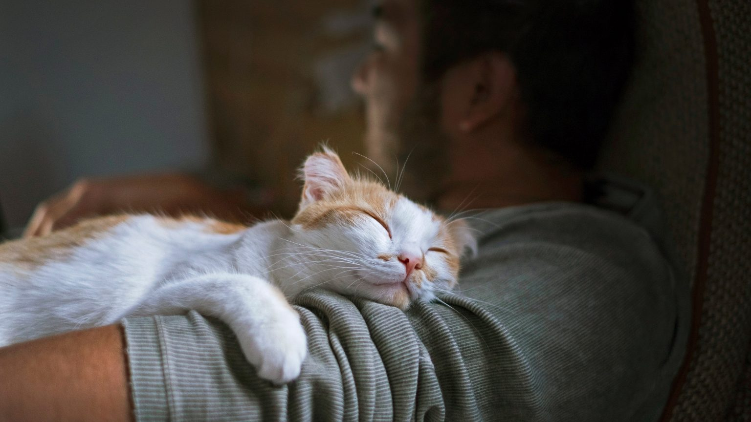 A cat sleeping on its owner