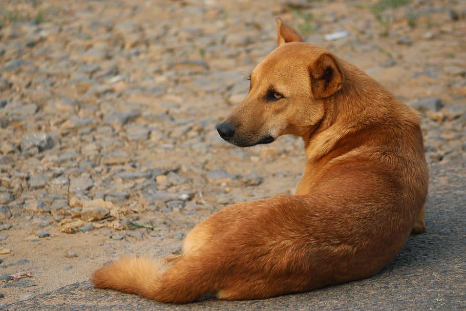 C:\Users\ASUS\Desktop\фото приют\stray-dog-dog-animal-pets.jpg