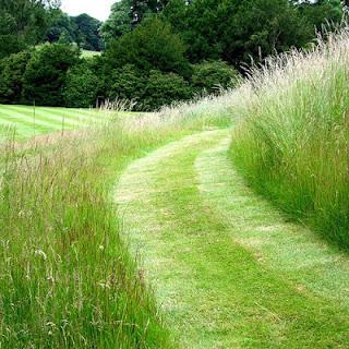 freshly+mown+grass.jpg