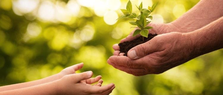 コロナ補助金植物子ども大人