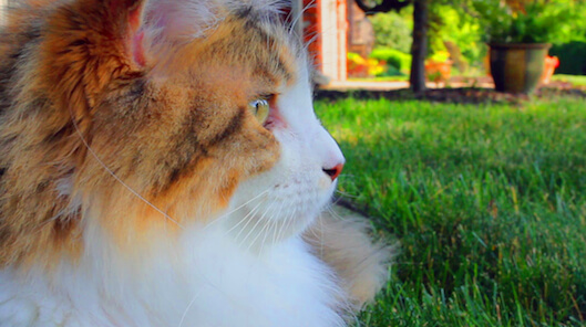 Beautiful Isabella Kitty
