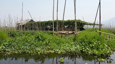 Inlay Lake Floating Farm