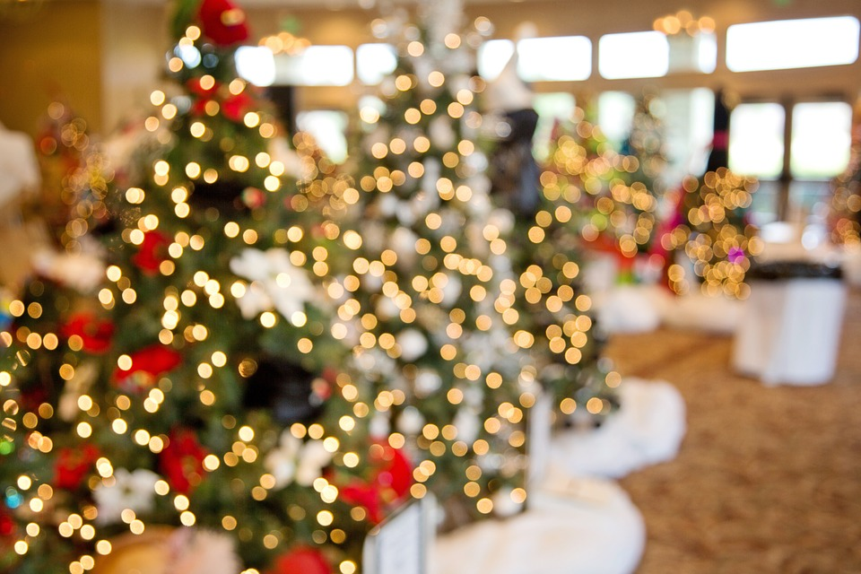 christmas-trees-1042542_960_720.jpg