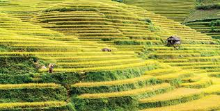 The rice terraces of Mu Cang Chai – Southeast Asia Globe